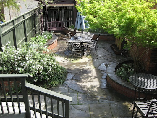 Row House Backyard Ideas : In spring, the fragrant Prague Viburnum on left, Japanese maple on